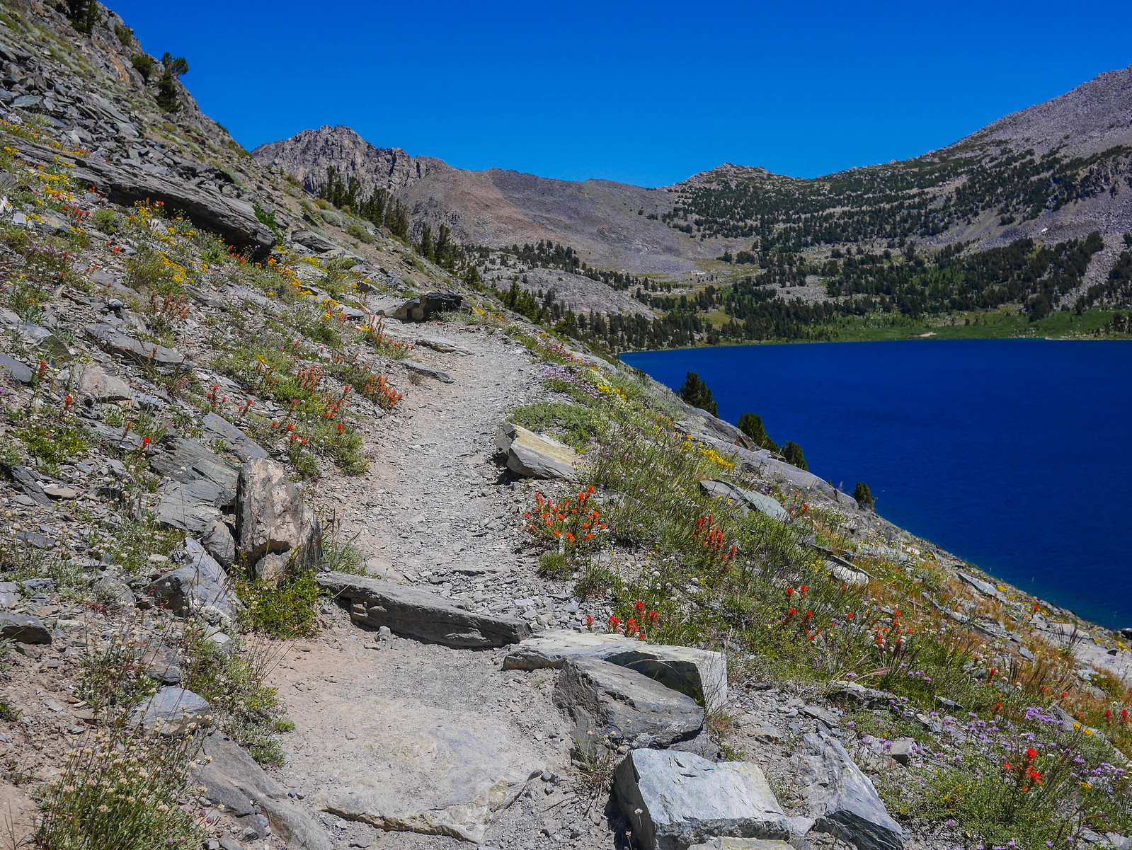Gorgeous wildflower show along the trail above Duck Lake towards Duck Pass