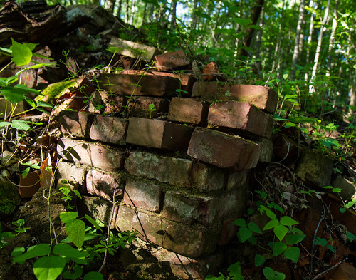Bricks in the Woods
