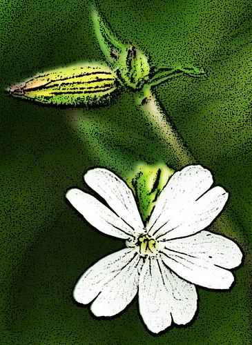 Blumenbilder Fotos Verfremdung Fotolabor digital Photoshop Filter