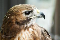 Edinburgh Bird