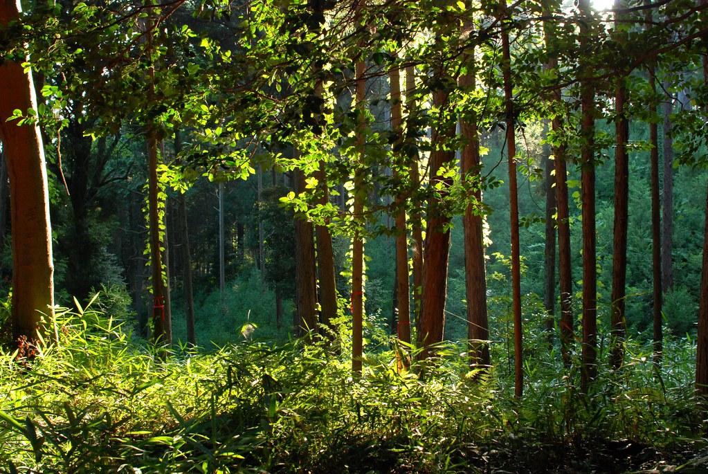 稲荷山の森