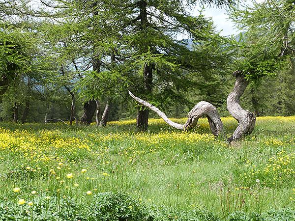 arbre tortueux