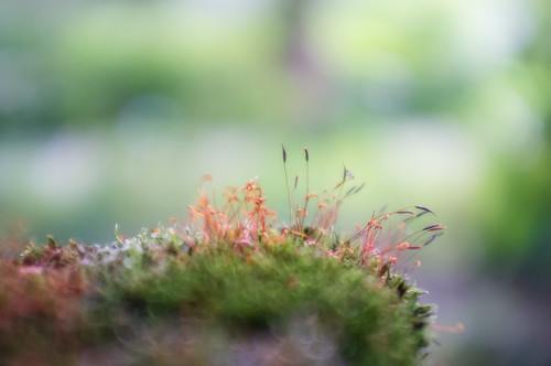 small world by Schub@