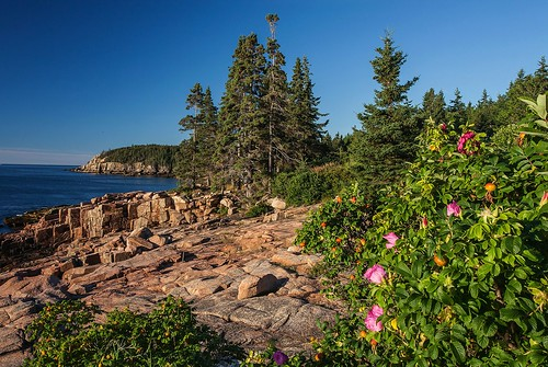 Images of Acadia.  Near Thunder Hole, Acadia National Park, Mount Desert Island, Maine.
