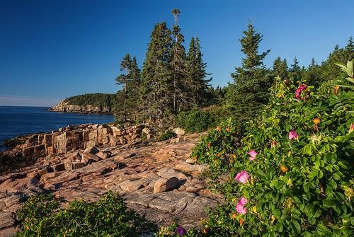 Images of Acadia.  Near Thunder Hole, Acadia National Park, Mount Desert Island, Maine.