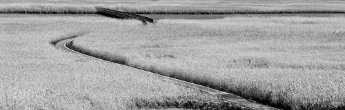 bw black monochrome grass tracks compositions australia olympus tasmania e3 gitzo launceston silverefexpro gt2542l