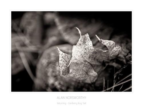 Returning- Cranberry Bog Trail by Alan Norsworthy