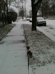 Saginaw in the snow