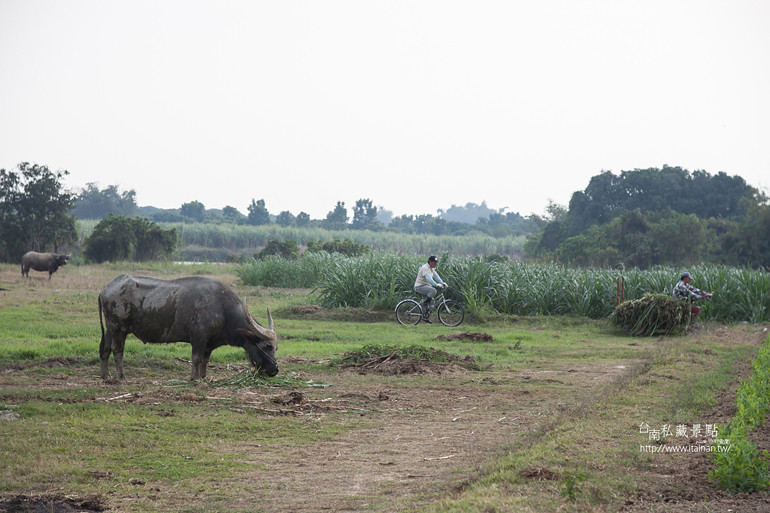台南私藏景點--德元埤&老牛的家 (32)
