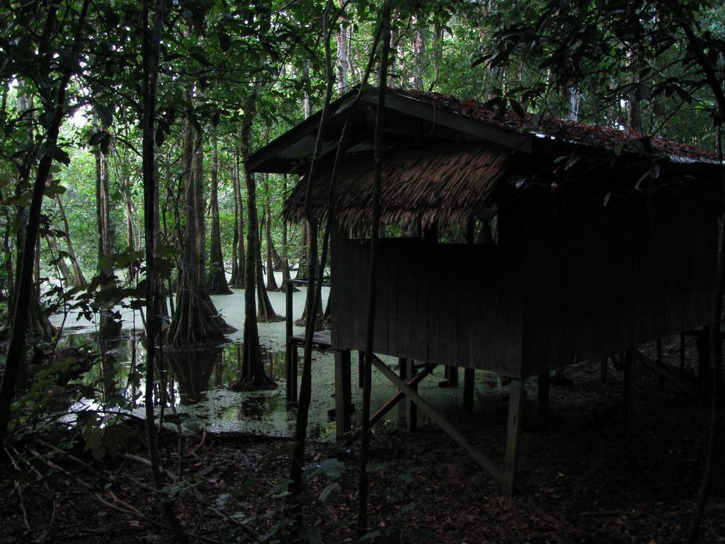 Самые прекрасные звуки природы можно услышать в болотах Малайзии