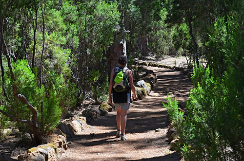 Forest walking, Tenerife