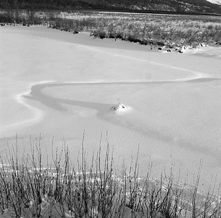 Curves in the snow, Potters Marsh, AK