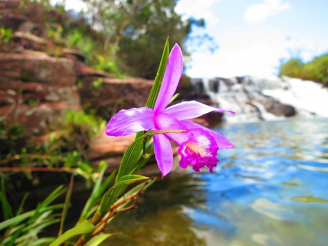 Flor de Mayo (en julio), 3 piscinas