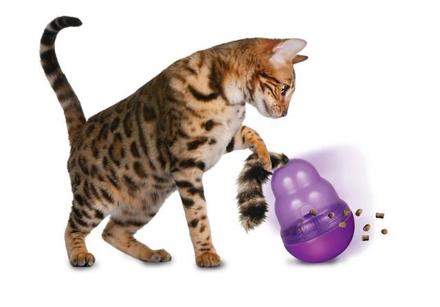 inteligencia para gatos