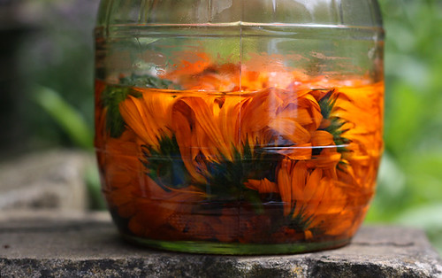 infused oil for making salve