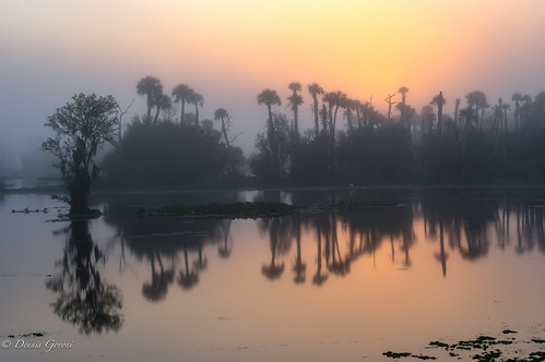 florida fog landscape orlandowetlands palmtrees sunrise water wetlands