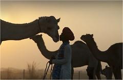 Camel Mela I