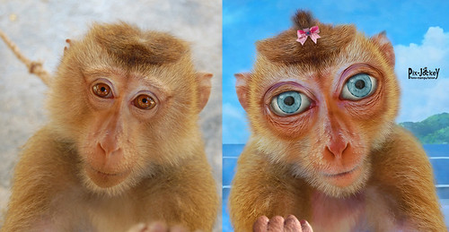 Monkey-Manga Before After