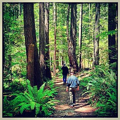 Mendocino redwoods hike with the folks on Father's Day.