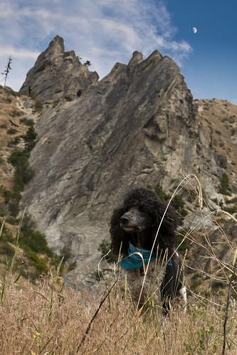blue sky cloud white black nature rock washington cliffs trail poodle briggs rockclimbing crags pinnacles scramble parti standardpoodle dryden particolor peshastinpinnacles drydenwa