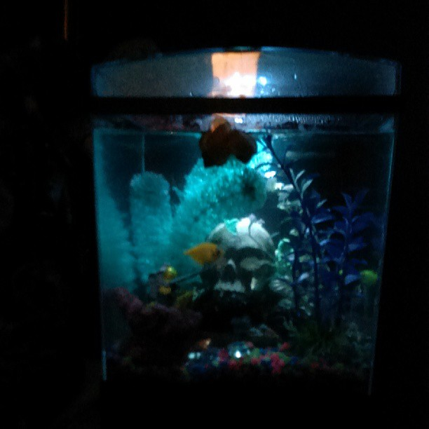 My fish tank glow in the dark flickr photo sharing for Glow in the dark fish tank