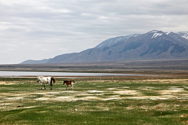 Horses in the grassland, Barkol バルクル、草原と馬