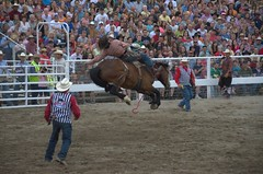 animal sports, rodeo, western riding, event, sports, charreada,