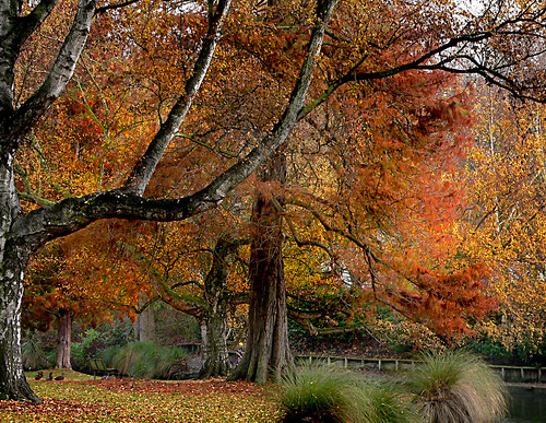 Hagley Park New Zealand.