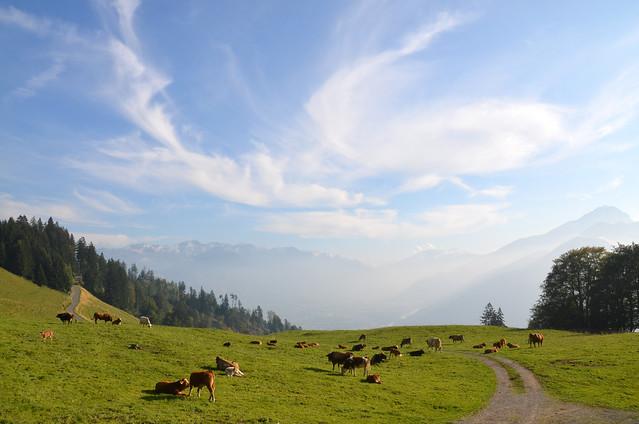 Paisaje con pradera suiza con vacas