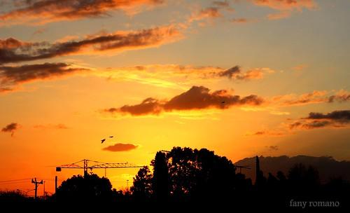 light sunset sky naturaleza color primavera luz sol argentina canon tramonto colores uccelli cielo nubes puestadesol luce horizonte reflejos dorado laplata fanyromano