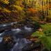 Autumnal Flow - Ore Mountains, Germany by david.richter