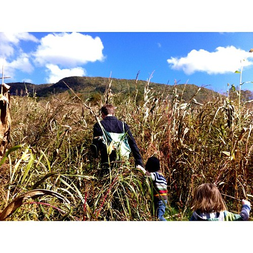 Corn maze in the mountains