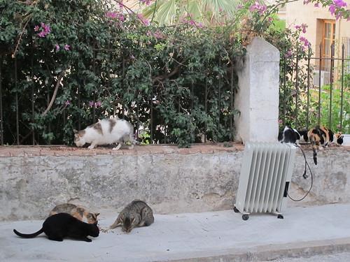 Cats of Dénia - Risager