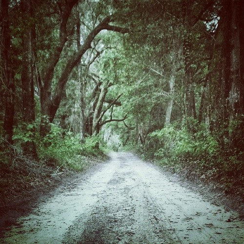 road trees green nature mobile forest square tech florida awesome squareformat hudson archer android northflorida iphoneography instagram instagramapp uploaded:by=instagram foursquare:venue=4d8677dd5e70224b629b3709