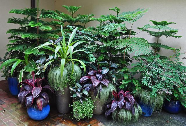 Restaurant Planters (2)