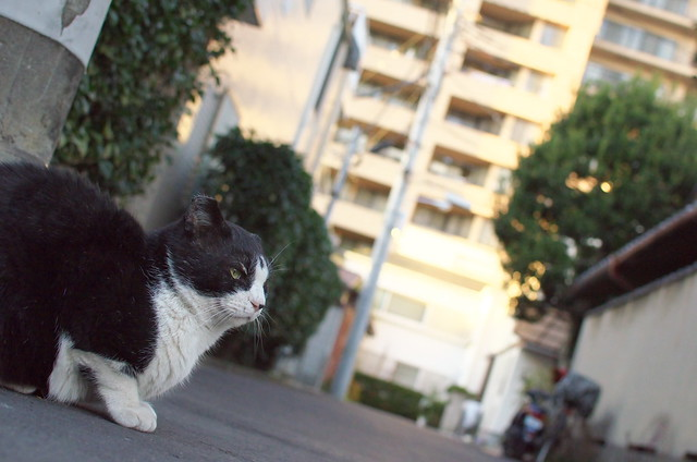 東京路地裏散歩 ネコ 谷中フォトウォーク 2013年12月30日