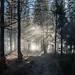_DSC8658 by Luke Plonka