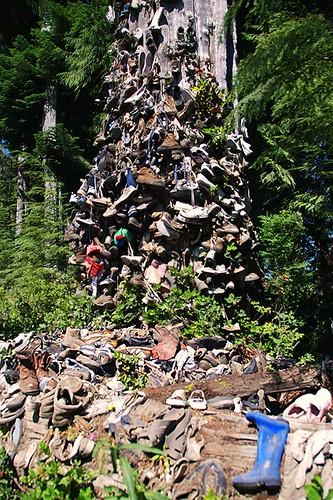 Shoe Tree near Port Hardy, North Vancouver Island, British Columbia, Canada