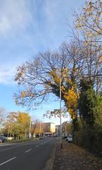 Sjećanje na jesen - Memory of autumn