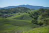 Hill View - Rolling Hills Open Space Park - Solano County - California - 07 March 2014