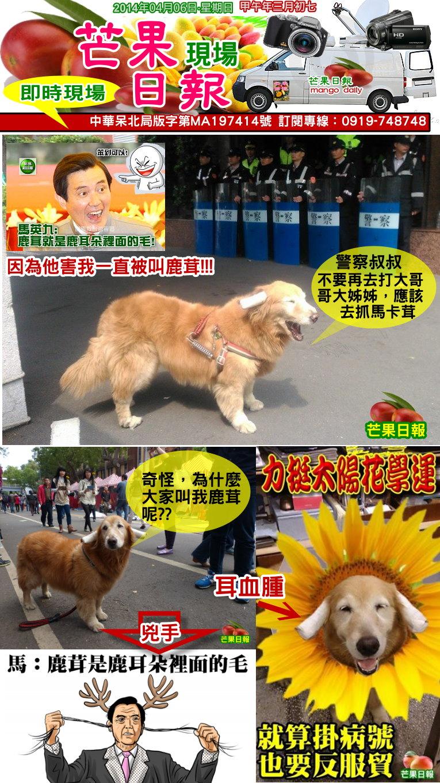 140406芒果日報--即時新聞--社狗上街挺學運,讓人憶起馬卡茸