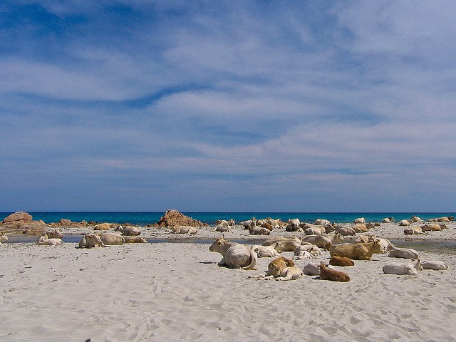 Primavera a Berchida - Sardegna