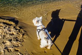 Me and my shadow, Jock