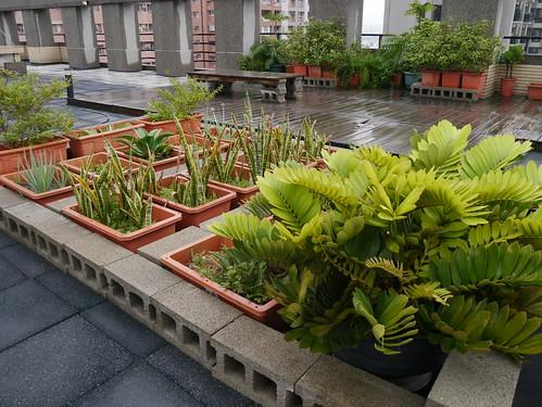 綠適居協會的頂樓;攝影:郭叡。