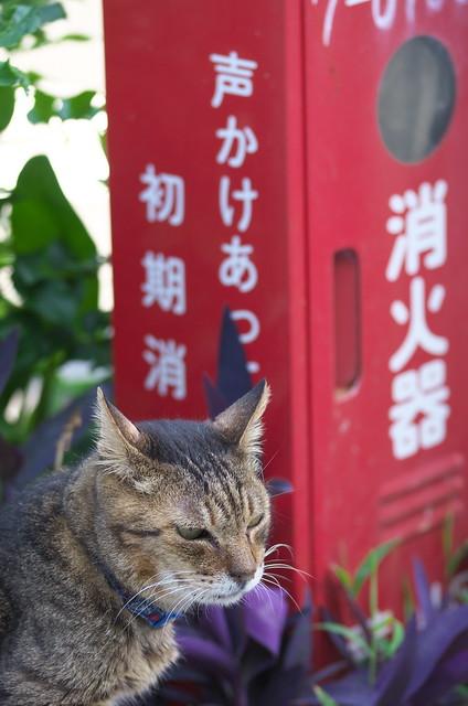 東京路地裏散歩 日暮里・谷中 2014年6月1日