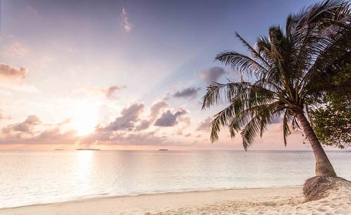 sea tree beach beautiful clouds sunrise island sand asia turtle palm malaysia borneo islan sabah