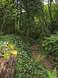 Blarney Castle fern garden