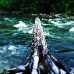 The mighty Cheakamus