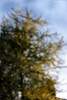 Tree In The Style Of Monet: Mutiple Pinhole Diffraction Image by Richard Stocker