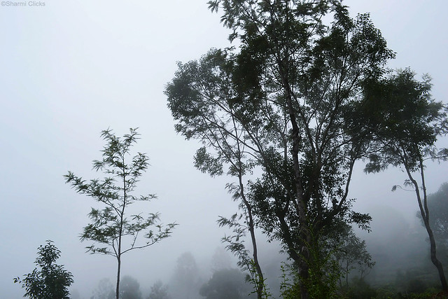 Mist25